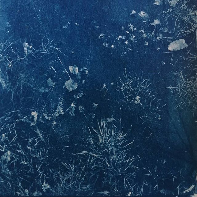 cyanotype - série Rivages